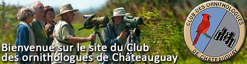 Ornitho_Chateauguay
