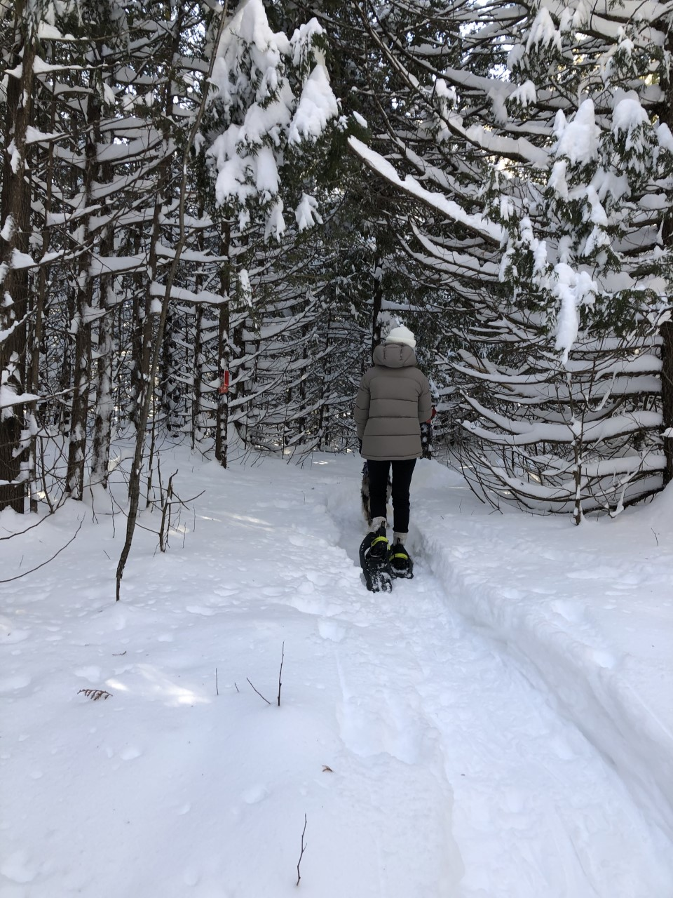 Sentier de raquette